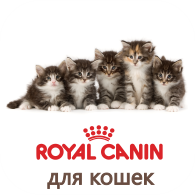 Каталог корма для кошек торговой марки Royal Canin